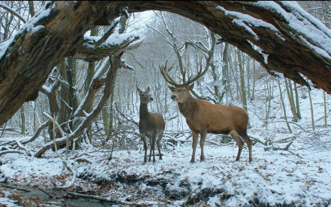 Martin Gobbins Berlinale: Top 10 und Fazit